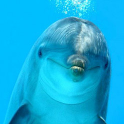 Dolphins on Evolution, Genetics and Intelligence