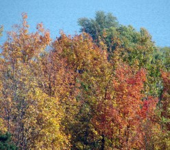 Beauty of Fall - Leaf Pigments and Why Leaves Change Color