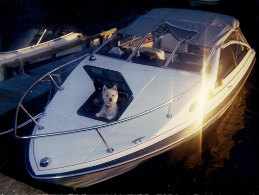 Dexter looking out the hatch of my boat
