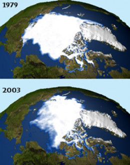 The severe declination of Arctic ice