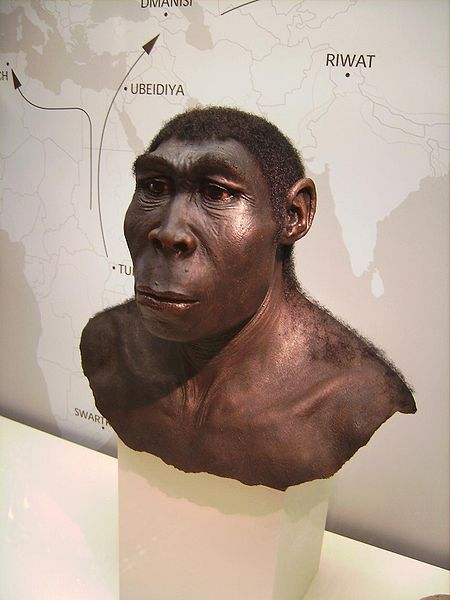 Homo erectus was the first hominid to evolve that actually resembled a human. He was also the first to deliberately control fire and probably the first to deliberately cook his food.