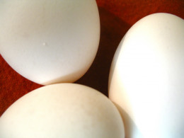 Eggs are useful for delicious, nutritious dishes any time of the day