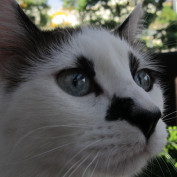 teresamg profile image
