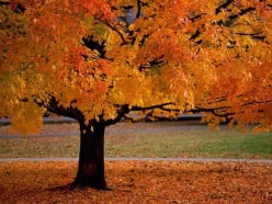 What is your favorite fall holiday?