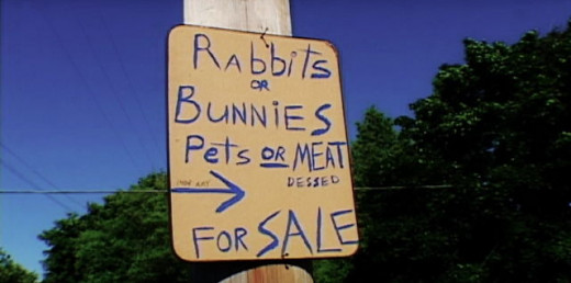 A woman is breeding and selling rabbits so she can make money to survive.
