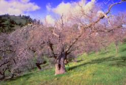 Haiku: Santa Ana Winds