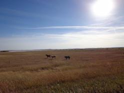Great-Grandfather Kinneard, One of the Earliest Pioneers of Saskatchewan