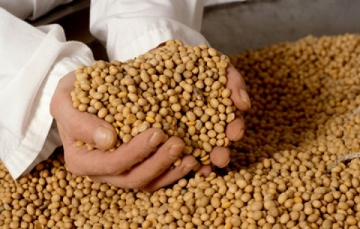 Soybeans - one of the largest commodities in the world