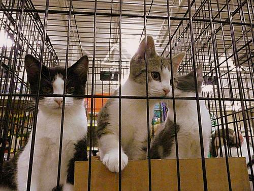 Kittens: Take me home!