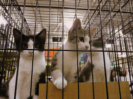 Kittens: Take me home!