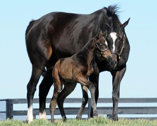 Zenyetta and foal