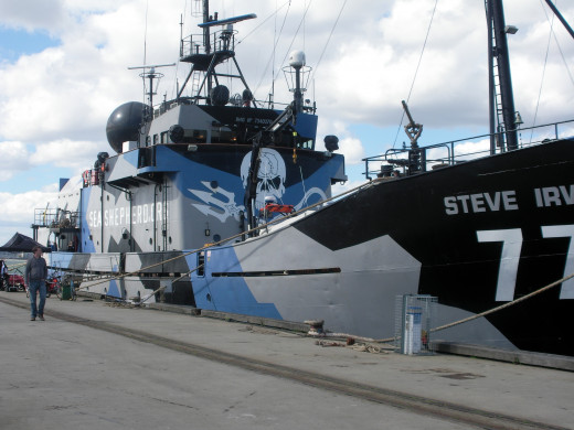 Protecting the oceans and their inhabitants with seashepherd.org