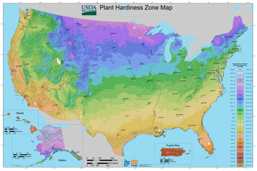 Always check plant hardiness and hardiness zones before planting.