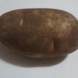 A Russet Potato from a local grocery store