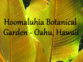 Hoomaluhia Botanical Garden | Best Free Things to see in Oahu, Hawaii