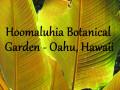 Hoomaluhia Botanical Garden | Best Free Things to see in Oahu, Hawaii