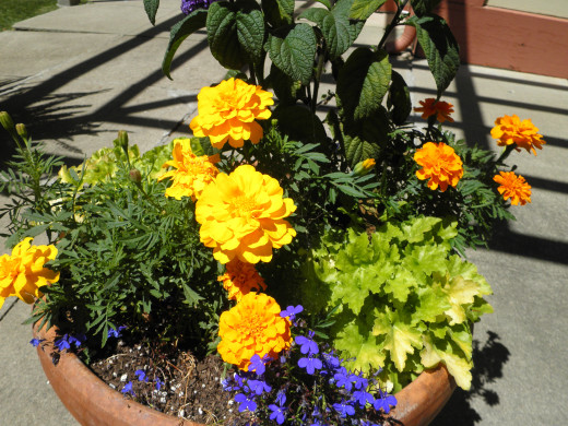 Have fun playing with colors in your container gardens.