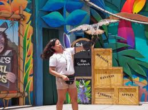 Animal Actors Studio at Universal Studios is a must see show that happens daily in the summer and it has animal stunts.