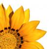Lindawon profile image