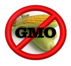 Isn't it important to label GMO foods in light of recent studies linking GMO corn to cancer?