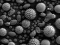 Seasonal Pollen Allergies