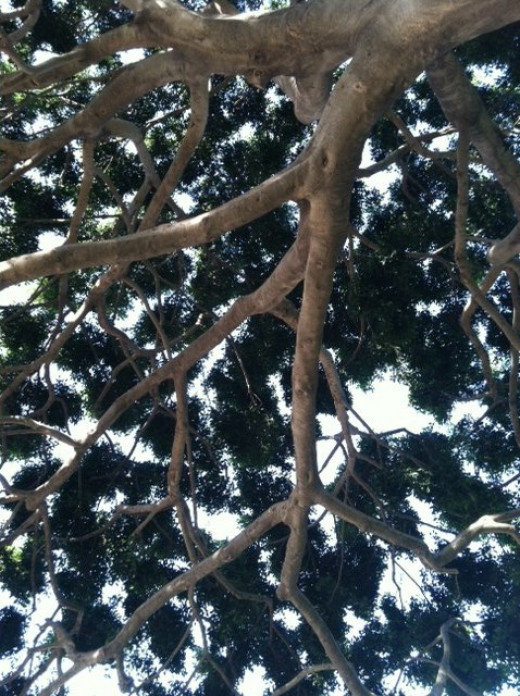 As all branches lead to the trunk from where they came, they also lead to the light.
