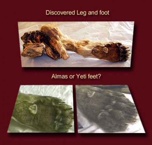 Sergey Semenov discovered the foot and leg of an unknown creature