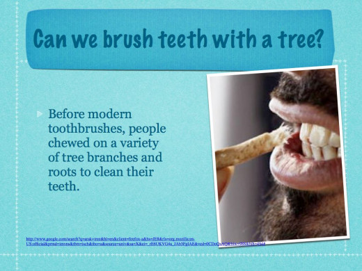 From the Miswak as a natural Toothbrush website.This image along with the next two slides are from the same site.
