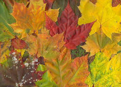 Why Do Leaves Change Color in Fall?