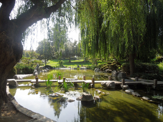 Scenery in Japanese Friendship Garden San Jose CA