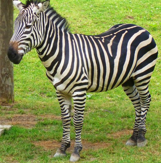 Nicely striped, I must say!