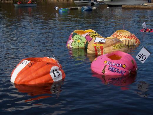 Giant pumpkins make beautiful racing boats