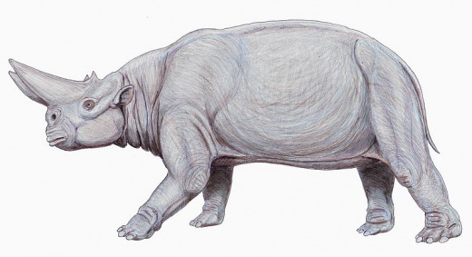 Arsinotherium lived in the mangrove swamps along the coast of what is now Egypt. Its horn was so large that it partially obstructed its vision.