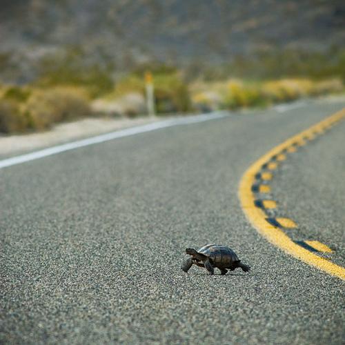 C'mon turtle, c'mon, don't slow down now!