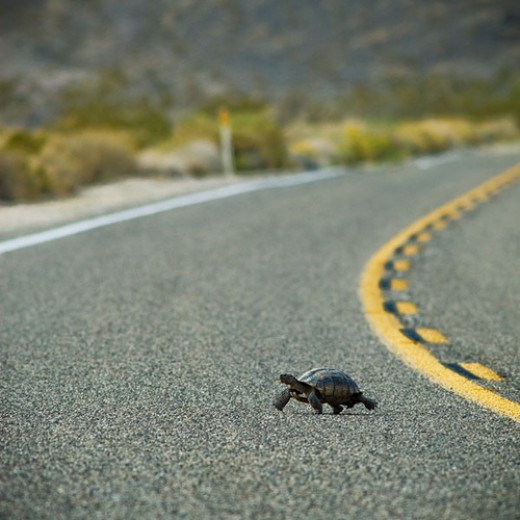 C'mon turtle, c'mon, don't slow down now!