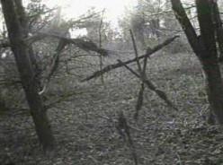 John's Horror Banana-nanza Episode Thirty-Six: The Blair Witch Project