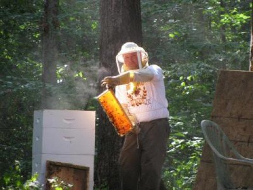 The Weathers family is devoted beekeepers and are working on restoring colonies.