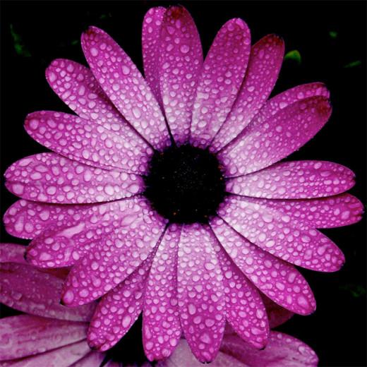 How To Keep Flower Arrangements Fresh