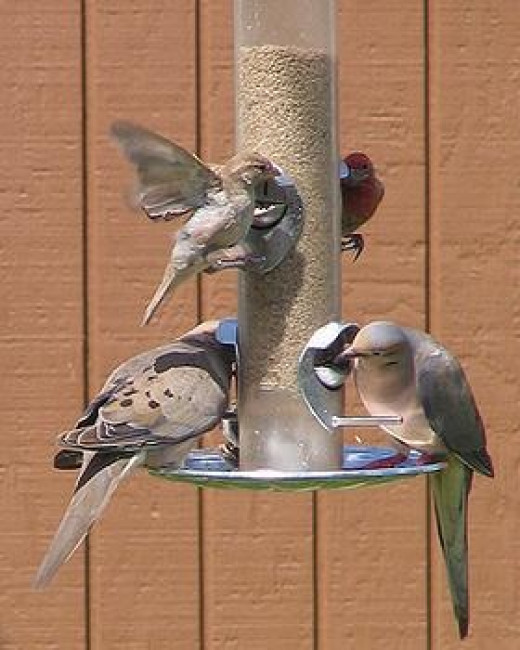 great gifts for backyard bird watchers hubpages