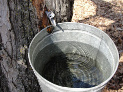 Maple Syrup Tapping Supplies