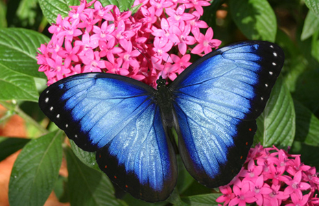 You'll feel like you're in paradise at Butterfly World.