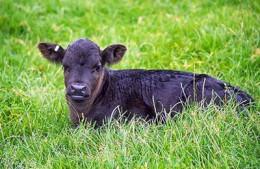Double AJ Farms is Animal Welfare Approved.