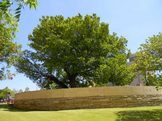The Survivor Tree lived beyond the bomb blast  of the Murrah Building in Oklahoma City.  It is a realistic portrayal of   adjustment to negative  circumstance and healing through careful nurturing.  People can accomplish this  also.