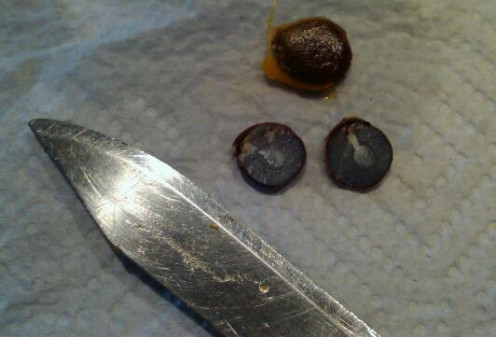 "Cutting into the persimmon seed requires a serrated edge knife.  Simply remove the seed's sac and then stand on edge and saw along the ""seam."""
