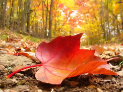 Autumn in my Heart ~haiku~