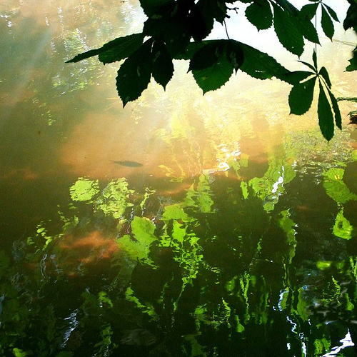 Light from tina negus Source: flickr.com