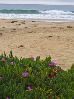 Crystal Cove, Newport Beach