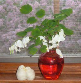 A small sprig of Bleeding Heart in a blood red vase creates a bit of drama on my kitchen window sill.