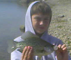This 10-inch white crappie was plucked from a swirl around driftwood in shallow water. It was caught on a Berkley Powerbait 2-inch white auger tail grub on a 1/16 oz. jighead.