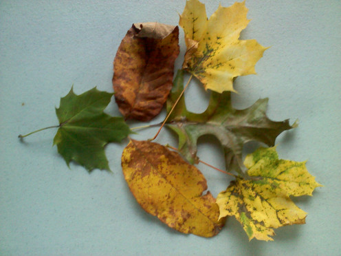 Leaves from my yard